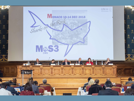 3rd Meeting of the Signatories to the Memorandum of Understanding  on the Conservation of Migratory Sharks draws to a close