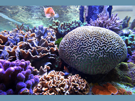 The future of coral reefs: what are the solutions for tackling the threats?  Monaco brings together top international experts from 3 to 7 December 2018