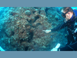 Protection strengthened for Spélugues coral reef, which borders urban extension project