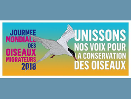 "Saturday 13 October 2018 – World Migratory Bird Day ""Uniting Our Voices for Bird Conservation"""